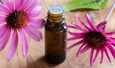 Εχινάκεια: Μάθετε πως μπορεί να Ωφελήσει την Υγεία σας και να τη Χρησιμοποιήσετε!